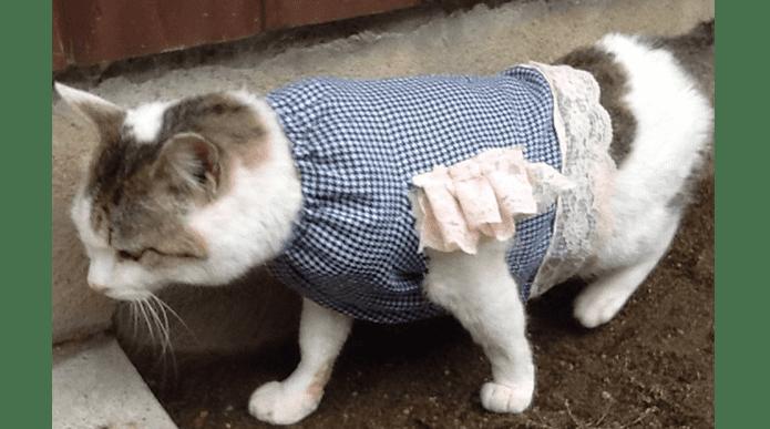 今日の猫ちゃん